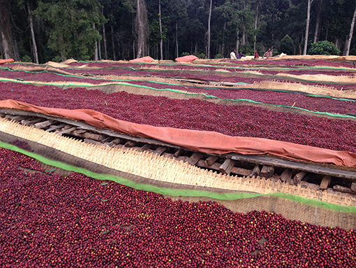 Processing beds for green beans