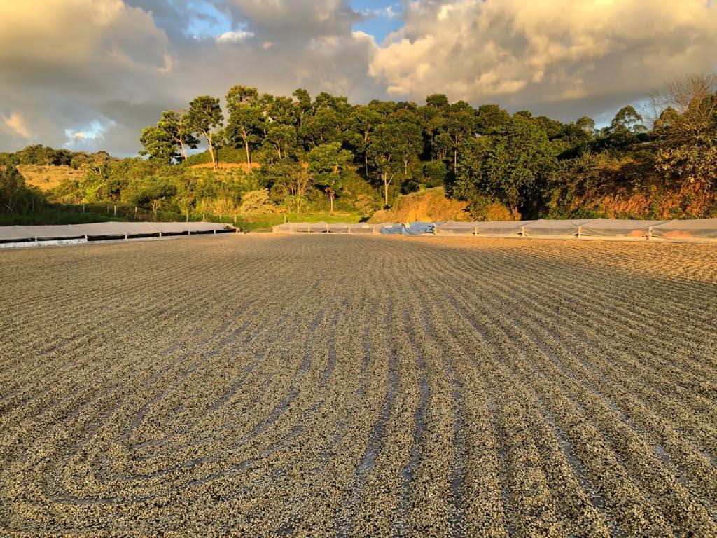 Brazil-coffee-farm