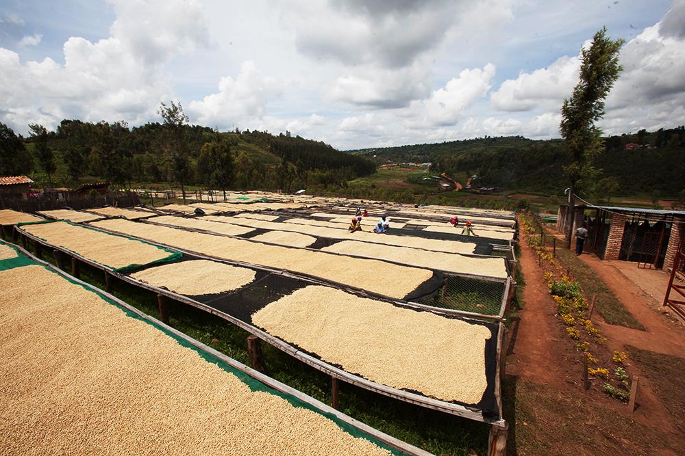 Huye Mountain coffee drying beds
