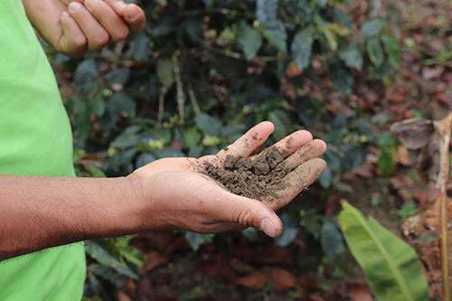Peru-coffee-farm