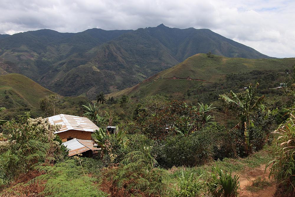 Coffee farm in Peru