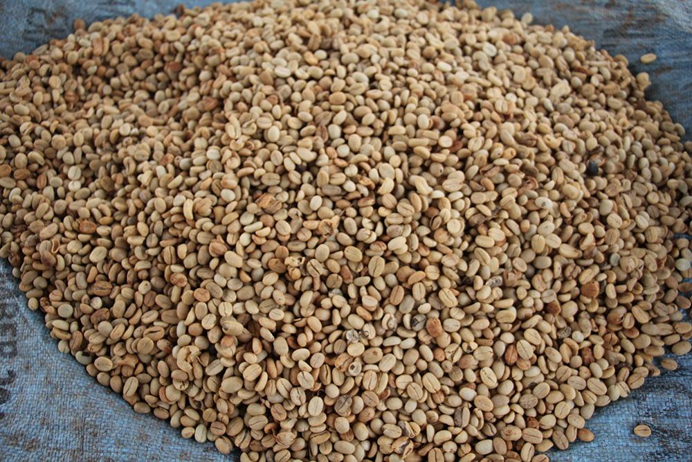 Processed green beans, Rwanda